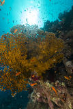 Fish and tropical reef in the Red Sea. Stock Photo