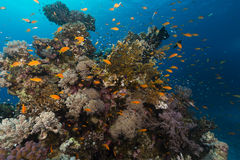 Fish and tropical reef in the Red Sea. Stock Photos