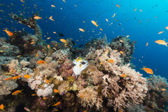 Fish and tropical reef in the Red Sea. Royalty Free Stock Photos