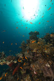 Fish and tropical reef in the Red Sea. Royalty Free Stock Photo