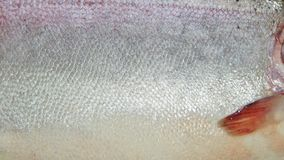 Trout skin texture. Fish trout closeup on isolated white background royalty free stock photos