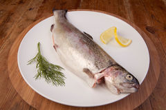 Fish trout meal plate Royalty Free Stock Photo