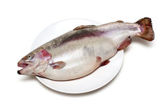 Fish trout on plate Stock Images