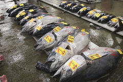 Fish at Tsukiji market, Japan. Fresh fish for sale at Tsukiji market in Tokyo, Japan. Tsukiji market is the world's larges fish market. Over 1/3 of the world's Stock Photography