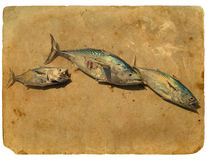 Fish Tuna on the sand. Old postcard. Fish Tuna on the sand. Stylization of retro postcards Stock Images