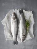 Fish4 Stock Photos
