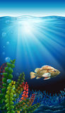 A fish. Under the sea Stock Image