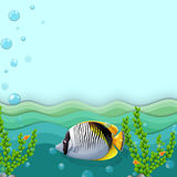 A fish under the sea. Illustration of a fish under the sea Royalty Free Stock Photos