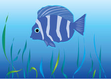 Fish under water. Blue tropical fish under water Stock Images