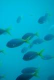 Fish - under water Stock Photo