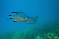 Fish under water Royalty Free Stock Photos
