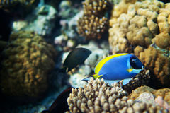 Fish under water. Colored fish under water among coral stock photo