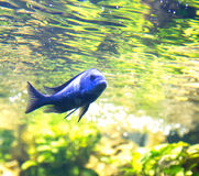 Fish under water in the sunlight Royalty Free Stock Images