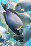 Fish underwater Stock Photo