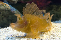 Fish underwater Royalty Free Stock Image