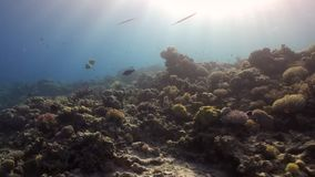 Fish underwater on background marine landscape in Red sea. stock video