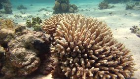 Fish and reef Beautiful environment. Red sea stock video