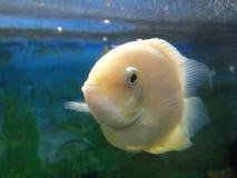 Fish underwater stock image