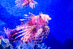 Fish in underwater Royalty Free Stock Photography