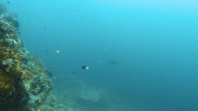 Fish underwater and coral reef. A wide shot of the waters under the sea with fishes. Shot pans to the right to show the sea stock video footage