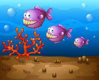 Fish underwater Royalty Free Stock Photography