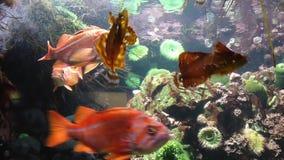 Fish underwater inside fishtank stock footage