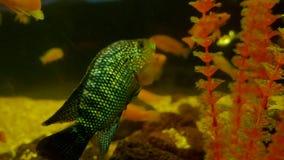 Fish underwater in ocean. Fish swim in a sea of beautiful ocean video 4k stock footage