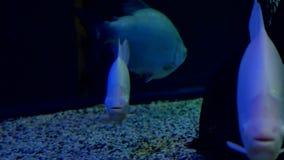 Fish underwater in ocean. Fish swim in a sea of beautiful video ocean stock video footage