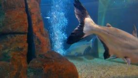 Fish underwater in ocean. Fish swim in a video 4k sea of beautiful ocean stock video footage