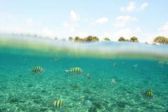 Fish underwater and palm trees above water Royalty Free Stock Images