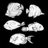 Fish  underwater sea ocean illustration marine Stock Photo