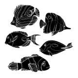 Fish  underwater sea ocean illustration marine Stock Images