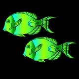 Fish  underwater sea ocean illustration marine. Fish  underwater sea ocean illustration Stock Photos