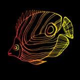 Fish  underwater sea ocean illustration marine Royalty Free Stock Images