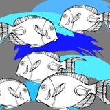 Fish  underwater sea ocean illustration marine. Fish  underwater sea ocean illustration Stock Image
