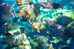 Fish underwater Stock Photography