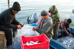 Fish unloading Stock Images