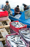 Fish unloading Stock Photos