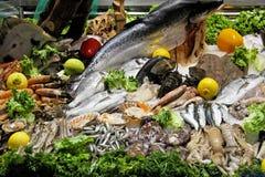 Fish variety. Seafood fish and shells variety in display stock image