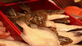 Fish market full of various ocean inhabitants in red plastic containers. Fish variety on a local market stock video
