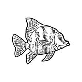 Fish. Vector black engraving vintage illustrations. Stock Images