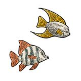 Fish. Vector color engraving vintage illustrations. Isolated on white background Royalty Free Stock Photos