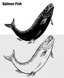 Fish vector by hand drawing. Salmon fish art highly detailed in line art style.Fish vector by hand drawing.Fish tattoo on white background Royalty Free Stock Photography