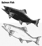 Fish vector by hand drawing. Salmon fish art highly detailed in line art style.Fish vector by hand drawing.Fish tattoo on white background Royalty Free Stock Photo