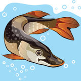 Fish, vector illustration Royalty Free Stock Photography