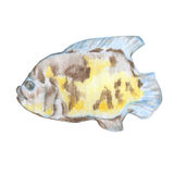 Fish. Vector illustration of hand drawn fish Stock Photography