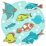 8 fish. Vector illustration, a set of eight aquarium fish on a blue background Stock Image