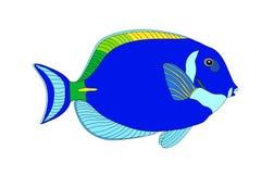 Fish. A vector illustration of tropical fish Royalty Free Stock Photos