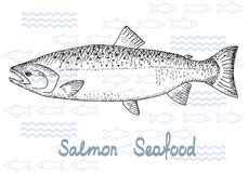 Fish vector salmon. Fish hand drawn vector sketches. Vintage design with salmon illustration. Fishing and seafood background Royalty Free Stock Images