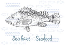 Fish vector salmon. Fish hand drawn vector sketches. Vintage design with sea bass illustration. Fishing and seafood background Royalty Free Stock Photography